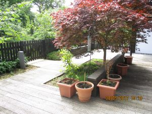 Fenced off outdoor space with trees planted and potted flowers, currently under development for residents