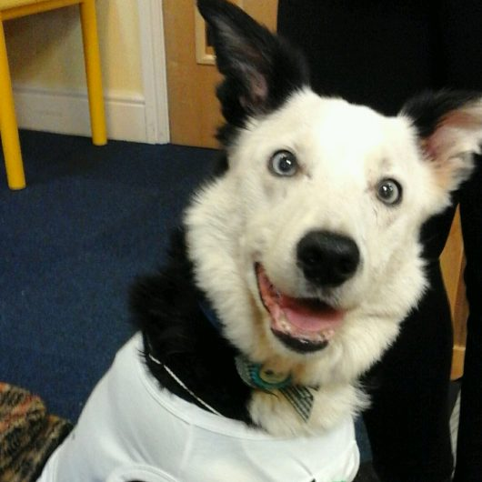 Buddy the Border Collie