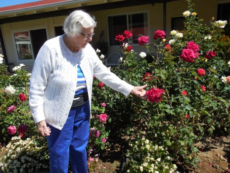 Roses- the Crowning Glory of Our Gardens